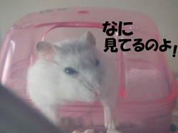 0719yuzu