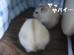 2006_0416_3