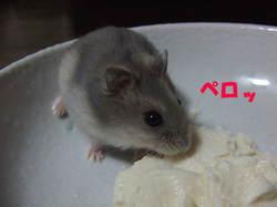 2006_0522yuzu002