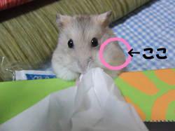 2006_0524mii