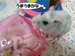 Yuzu1_1