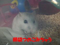 Yuzu3_2