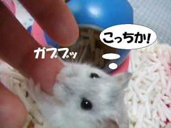 Yuzu4