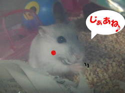 Yuzu411