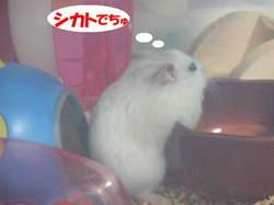 Yuzu4_1