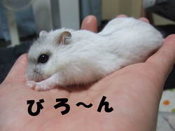 Yuzu_1_2