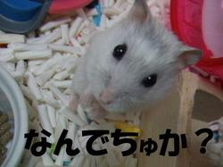 Yuzu_4