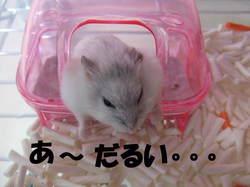 Yuzu__1